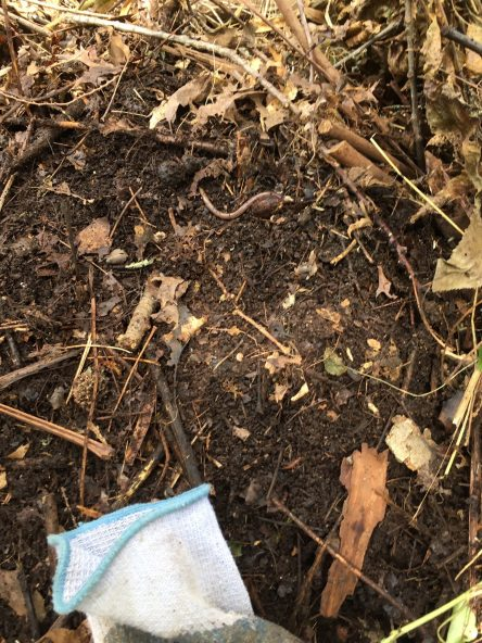 Dirt layer in compost copy